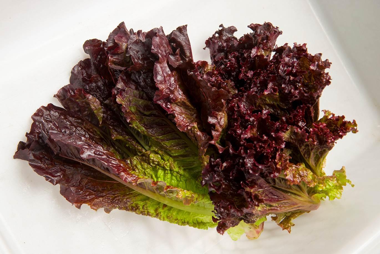Rutgers Scarlet Lettuce™