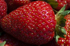 Rutgers Scarlet™ Strawberry