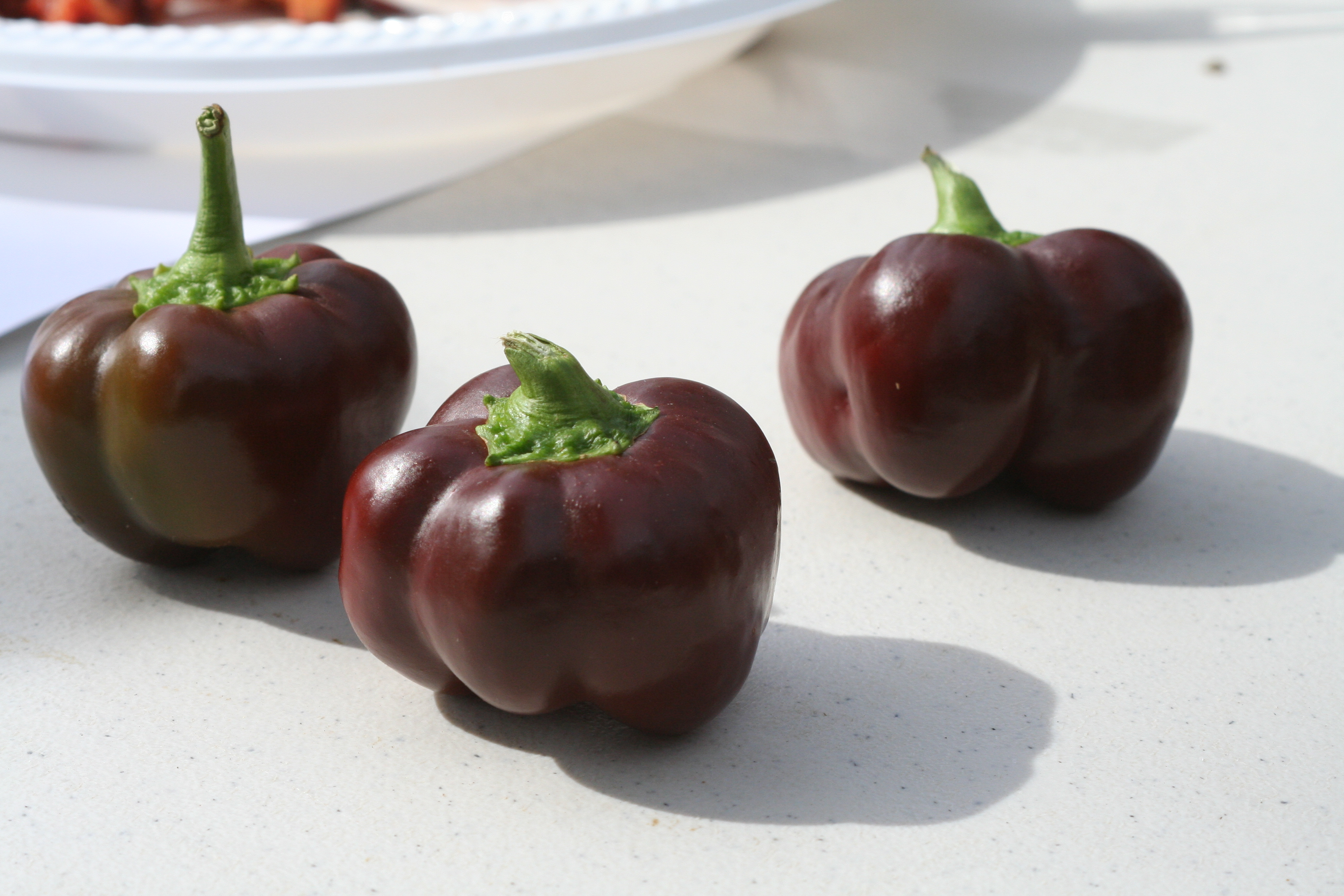 08-08-27 Snyder Farm Tomato Tasting 045