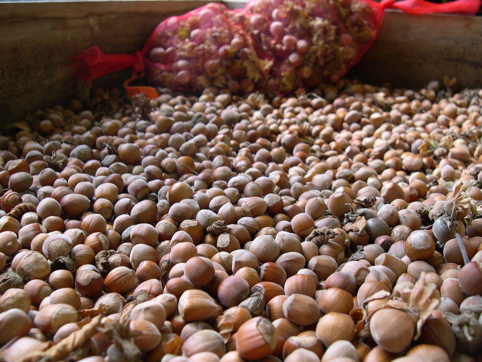 Hazelnuts004