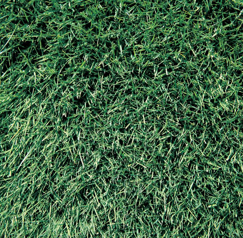 RUturfgrass