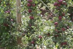 08-08-27 Snyder Farm Tomato Tasting 033