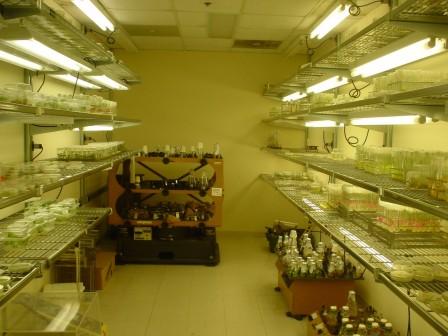 asparagus lab at Rutgers