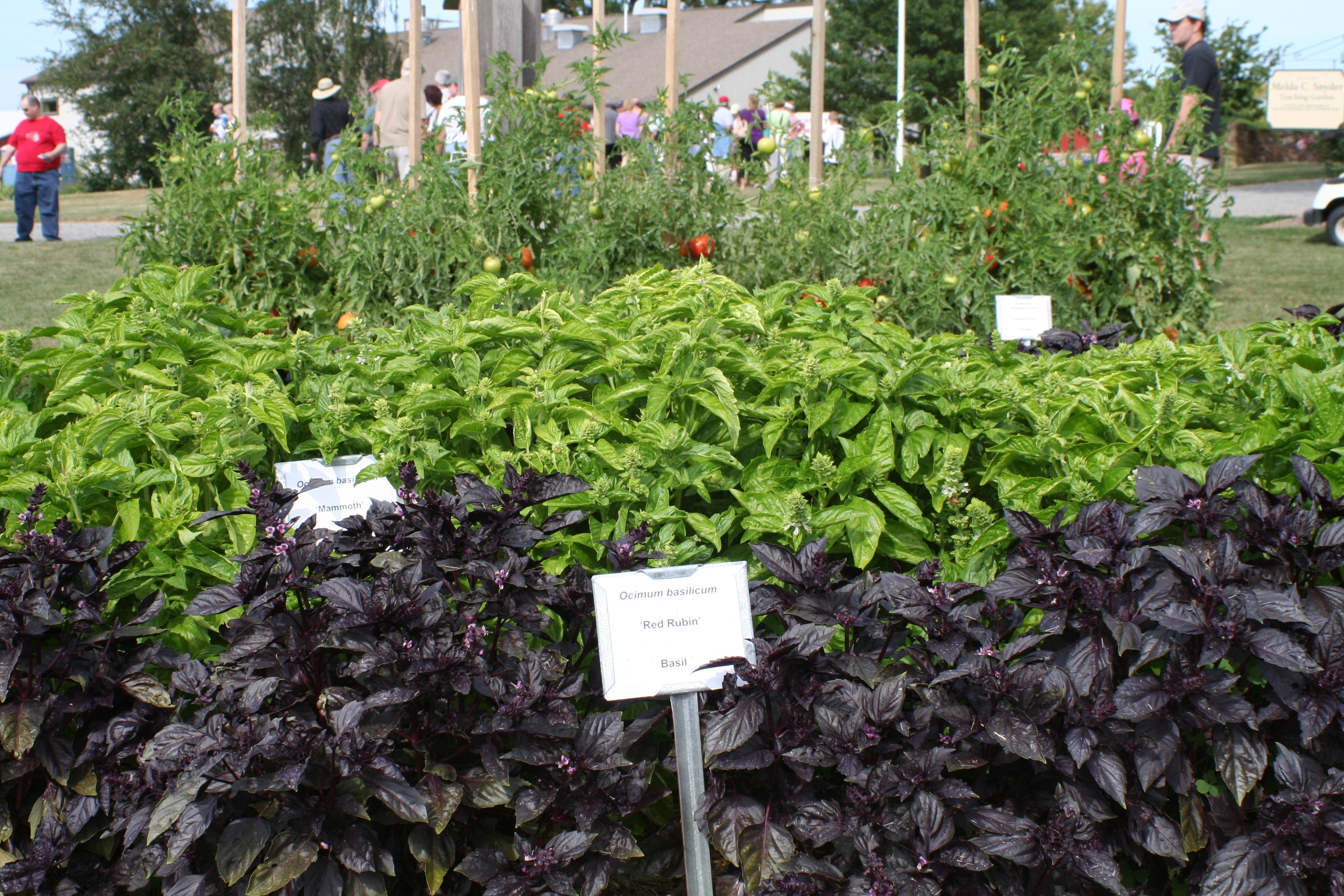 08-08-27 Snyder Farm Tomato Tasting 042