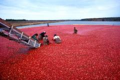 k4418-6-cranberry