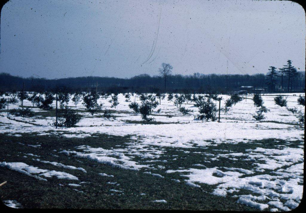Holly Collection around 1960