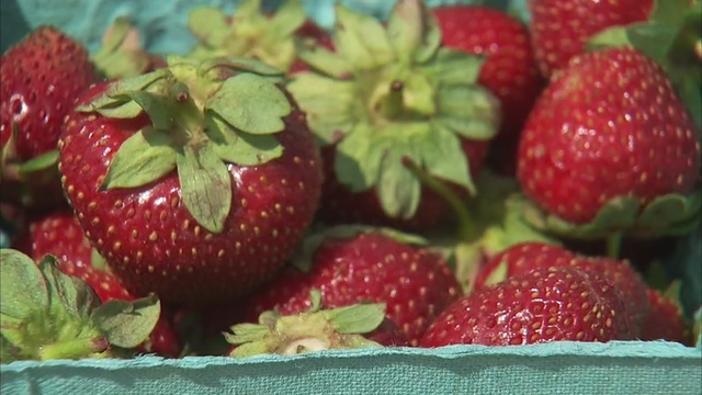 Rutgers_Scarlet_strawberry