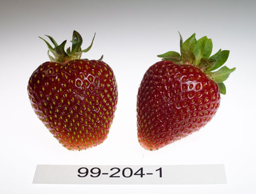 Strawberry-selections-May-24,-2010-8