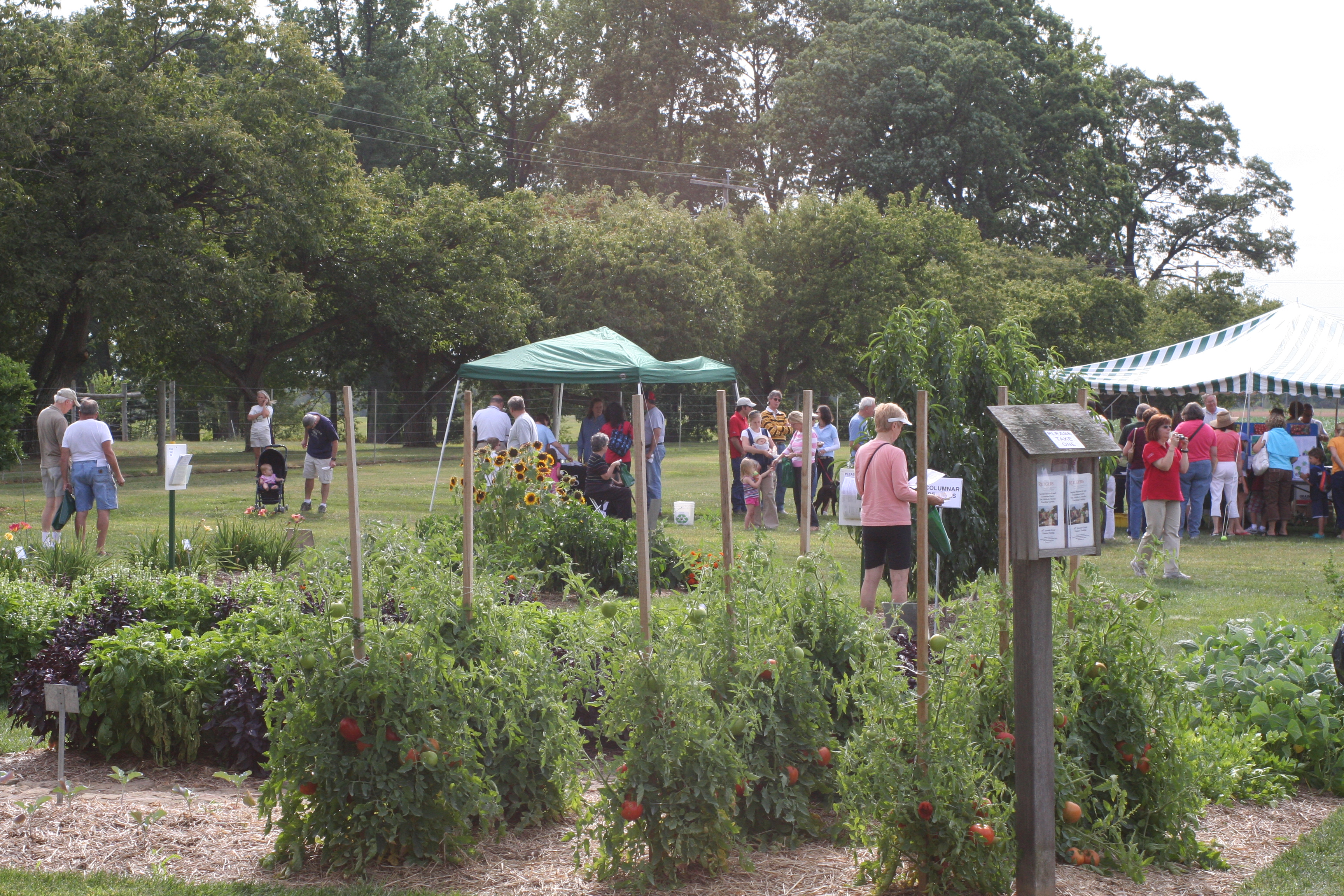 08-08-27 Snyder Farm Tomato Tasting 041