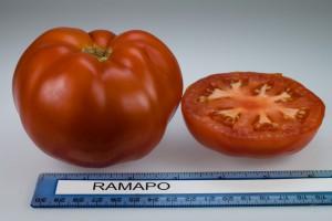 Ramapo (1)
